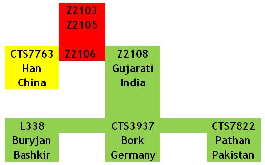 Данные BIG-Y по гаплогруппе R1b-Z2103